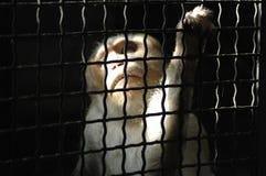 πίθηκος συμπεράσματος Στοκ Φωτογραφία