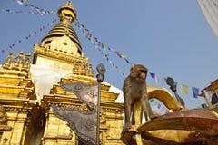 Πίθηκος συνεδρίασης στο stupa swayambhunath στο Κατμαντού, Νεπάλ στοκ φωτογραφίες