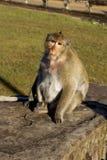 Πίθηκος συνεδρίασης στοκ εικόνες
