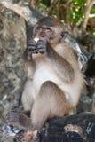 Πίθηκος, Ταϊλάνδη Στοκ φωτογραφία με δικαίωμα ελεύθερης χρήσης