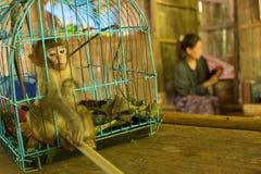 Πίθηκος της Pet σε ένα μικρό μπλε κλουβί Στοκ Εικόνες