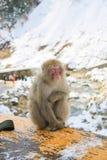 Πίθηκος χιονιού στο κιγκλίδωμα στα ιαπωνικά βουνά Στοκ Εικόνα