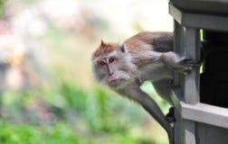 πίθηκος στοκ φωτογραφία με δικαίωμα ελεύθερης χρήσης
