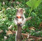 Πίθηκος Στοκ Φωτογραφία