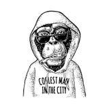 Πίθηκος hipster που ντύνεται στο hoodie με το γράφοντας πιό δροσερό άτομο στην πόλη απεικόνιση αποθεμάτων