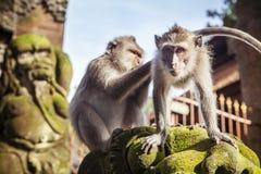 Πίθηκος macaque που εγκαθιστά στην πέτρα Στοκ εικόνα με δικαίωμα ελεύθερης χρήσης