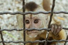 Πίθηκος Macaque σε ένα κλουβί, Στοκ Φωτογραφία