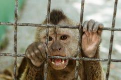 Πίθηκος Macaque σε ένα κλουβί, Στοκ φωτογραφία με δικαίωμα ελεύθερης χρήσης