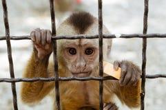 Πίθηκος Macaque σε ένα κλουβί, Στοκ Φωτογραφίες