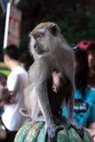 Πίθηκος Macaque στις σπηλιές Batu Στοκ φωτογραφίες με δικαίωμα ελεύθερης χρήσης