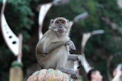 Πίθηκος Macaque Στοκ φωτογραφία με δικαίωμα ελεύθερης χρήσης