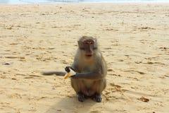 Πίθηκος Macaque Στοκ Εικόνα