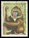 Πίθηκος, Mandrill στοκ εικόνες με δικαίωμα ελεύθερης χρήσης