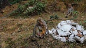 Πίθηκος Mom με ένα παιδί απόθεμα βίντεο