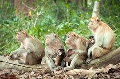 Πίθηκος mom Στοκ Εικόνες