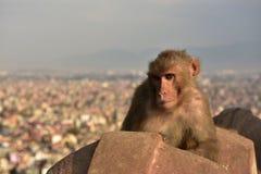 Πίθηκος, stupa Buddanath, Νεπάλ Στοκ εικόνα με δικαίωμα ελεύθερης χρήσης