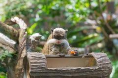 Πίθηκος tamarin αυτοκρατόρων με το μεγάλο mustache στο βαθύ δάσος Στοκ Εικόνες