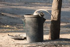 Πίθηκος Vervet σε έναν trashcan στοκ φωτογραφία