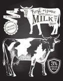Πίνακας αγελάδων Στοκ Φωτογραφίες