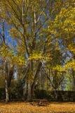 Πίνακας και πάγκοι σε ένα φθινοπωρινό πάρκο - Στοκ Φωτογραφία