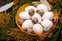 Πίνακας Πάσχας που θέτει με τα άσπρα αυγά με την εκλεκτική εικόνα εστίασης λουλουδιών mimosa Πάσχα ευτυχές Στοκ φωτογραφίες με δικαίωμα ελεύθερης χρήσης