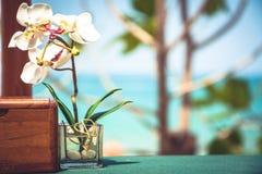 Πίνακας στον τροπικό καφέ παραλιών με την άποψη ορχιδεών και θάλασσας και θολωμένο υπόβαθρο παραλιών κατά τη διάρκεια θερινή των  Στοκ φωτογραφία με δικαίωμα ελεύθερης χρήσης