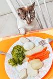 πίνακας τροφίμων γατών Στοκ εικόνες με δικαίωμα ελεύθερης χρήσης