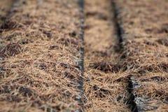 Πίνακες που καλύπτονται με το ξηρό βρύο, αγροτικό υπόβαθρο στοκ εικόνα με δικαίωμα ελεύθερης χρήσης