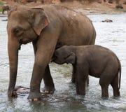 πίνοντας μητέρα ελεφάντων μωρών Στοκ φωτογραφία με δικαίωμα ελεύθερης χρήσης