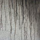 Πίσσα στον τοίχο Στοκ φωτογραφίες με δικαίωμα ελεύθερης χρήσης