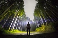 Πίσω άποψη του ατόμου με τον επικεφαλής φακό που στέκεται στο δασικό επίγειο δρόμο μεταξύ των ψηλών λαμπρά φωτισμένων κομψών δέντ στοκ φωτογραφία με δικαίωμα ελεύθερης χρήσης