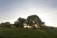 πίσω αναμμένα δέντρα Στοκ Φωτογραφίες