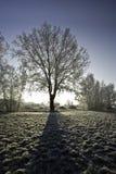 πίσω αναμμένο δέντρο χιονι&omicro στοκ φωτογραφία