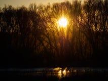 πίσω από τα δέντρα ηλιοβασι Στοκ φωτογραφίες με δικαίωμα ελεύθερης χρήσης