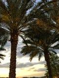 πίσω από τα δέντρα ηλιοβασιλέματος φοινικών Στοκ Εικόνες