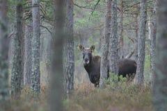 πίσω από τα δέντρα Στοκ φωτογραφία με δικαίωμα ελεύθερης χρήσης