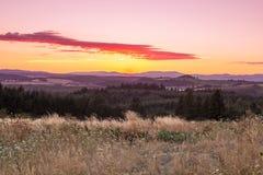 πίσω από τα μόνιμα δέντρα δύο θερινού ηλιοβασιλέματος πεύκων Στοκ Εικόνα