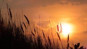 πίσω από τα μόνιμα δέντρα δύο θερινού ηλιοβασιλέματος πεύκων Στοκ Φωτογραφίες