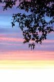 πίσω από τα μόνιμα δέντρα δύο θερινού ηλιοβασιλέματος πεύκων Στοκ Εικόνες