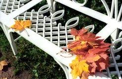 πίσω από τα φύλλα που αφήνον& Στοκ Εικόνες