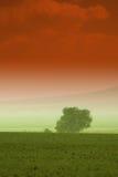 πίσω από το αγροτικό δέντρο Στοκ φωτογραφίες με δικαίωμα ελεύθερης χρήσης