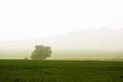 πίσω από το αγροτικό δέντρο Στοκ Εικόνα
