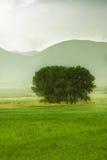 πίσω από το αγροτικό δέντρο Στοκ Εικόνες