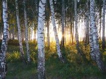 πίσω από το ηλιοβασίλεμα &alp Στοκ εικόνα με δικαίωμα ελεύθερης χρήσης