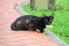Πίσω γάτα Στοκ φωτογραφίες με δικαίωμα ελεύθερης χρήσης