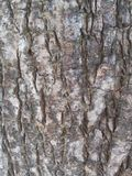 Πίσω επίγειο δέντρο Στοκ εικόνα με δικαίωμα ελεύθερης χρήσης