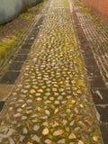 Πίσω οδός Στοκ φωτογραφίες με δικαίωμα ελεύθερης χρήσης