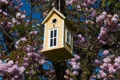 πίσω πουλιών μπλε κόκκινη αμερικανική άσπρη αυλή σπιτιών χρώματος κρεμώντας Στοκ εικόνες με δικαίωμα ελεύθερης χρήσης