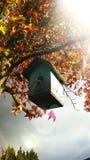 πίσω πουλιών μπλε κόκκινη αμερικανική άσπρη αυλή σπιτιών χρώματος κρεμώντας Στοκ Φωτογραφία