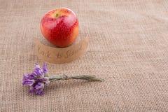 Πίσω στο σχολικό θέμα με το λουλούδι και το μήλο Στοκ φωτογραφία με δικαίωμα ελεύθερης χρήσης